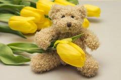 玩具熊和黄色郁金香 妇女的礼物 库存图片