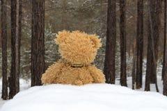 玩具熊在冬天森林里 库存图片