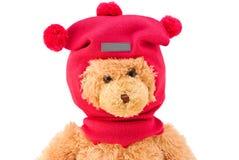 玩具熊在冬天编织了有绒球的帽子 免版税图库摄影