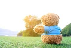 玩具熊坐与爆炸日出光,梦想的草 库存图片