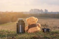 玩具熊夫妇坐下落的秋叶在小山顶部和看阳光的城市 免版税图库摄影