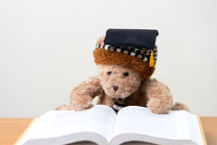 玩具熊毕业生读一本书 回到学校 库存照片