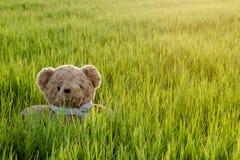 玩具熊,坐在单独草的玩具熊 免版税图库摄影