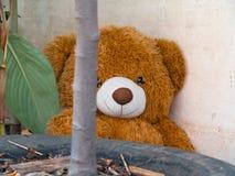 玩具熊,棕色 库存图片