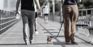 玩具狗传统上提到一条非常小狗或编组狗小和非常小品种  免版税图库摄影