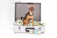 玩具狗和货币,演播室射击 免版税库存图片