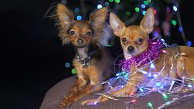 玩具狗是一条黄色新年` s狗 免版税库存照片