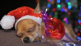 玩具狗是一条黄色新年` s狗 库存图片