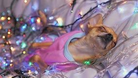 玩具狗是一条黄色新年` s狗 免版税库存图片