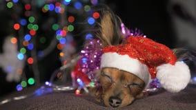 玩具狗是一条黄色新年` s狗 库存照片