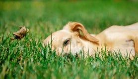 玩具狗的画象 免版税图库摄影