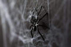 黑玩具蜘蛛的万圣夜装饰在蜘蛛网的 免版税库存图片