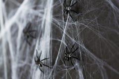 黑玩具蜘蛛的万圣夜装饰在蜘蛛网的 免版税库存照片