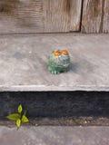 玩具青蛙坐contry门廊 免版税库存图片