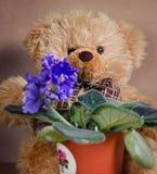 玩具-熊坐在房子紫罗兰的花 免版税库存照片