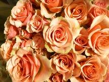 玫瑰三文鱼和绿色花束您的 免版税库存图片