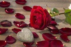 玫瑰为情人节和母亲节 免版税库存图片