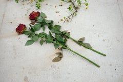 玫瑰二 免版税库存图片
