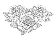 玫瑰传染媒介剪影  免版税库存照片