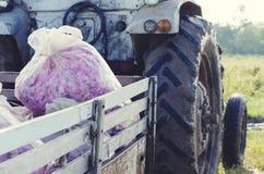 玫瑰保加利亚袋子卡车芳香化妆种植园开花绽放桃红色油奉承话 库存照片