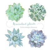 玫瑰华饰塑造了多汁植物Echeveria传染媒介设计集合 向量例证