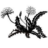 玫瑰华饰花蒲公英 夏天植物黑剪影白色背景的 向量例证