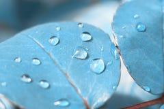 玫瑰叶子,蓝色,墙纸纹理,抽象,概念 库存照片