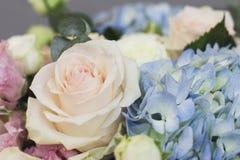 玫瑰和八仙花属背景典雅的花束  库存图片