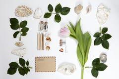 从玫瑰和壳叶子的框架在白色背景 夏天记忆  免版税库存图片