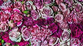 玫瑰和康乃馨 库存图片