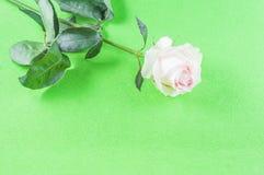 玫瑰和瓣花在不同的背景 免版税库存照片