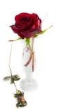 玫瑰和花瓶在白色情人节构成 免版税库存照片