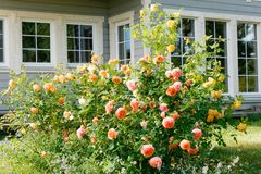 玫瑰和药草园乡间别墅外 免版税库存照片