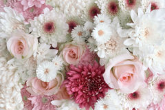 玫瑰和雏菊 免版税库存图片