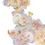 玫瑰和蝴蝶 库存图片