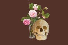 玫瑰和头骨 库存照片