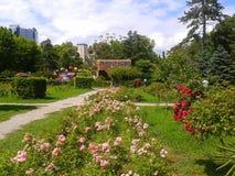玫瑰园在公园里维埃拉,手段索契,俄罗斯 库存图片