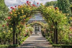 玫瑰园在植物园里 免版税库存图片