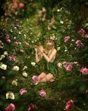 玫瑰园, 3d CG 免版税图库摄影