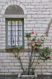 玫瑰墙壁 免版税图库摄影