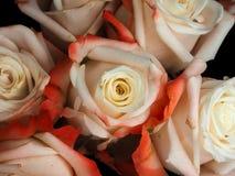 玫瑰头  免版税图库摄影