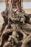 玫瑰婚姻的花束与红色丝带的在树的根在 免版税图库摄影