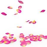 玫瑰对地板的花瓣秋天 免版税库存照片