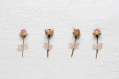 玫瑰干花在白皮书的 桃红色 黄色 免版税库存照片