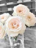 玫瑰是罗斯爱&甜点 免版税图库摄影