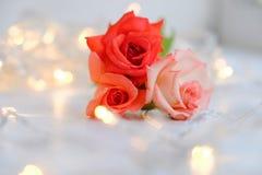 玫瑰有bokeh背景 免版税图库摄影