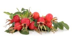 玫瑰果果子 库存图片