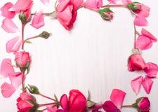 玫瑰框架在白色背景的 平的位置,顶视图 库存图片