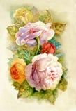 玫瑰水彩 免版税库存图片