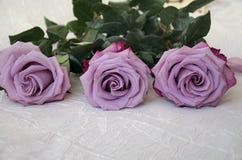 玫瑰灰色,淡紫色,种类 免版税图库摄影